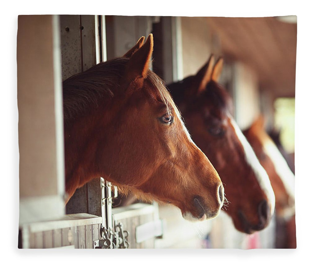 Horse Fleece Blanket featuring the photograph Four Horses In Stables by Olivia Bell Photography