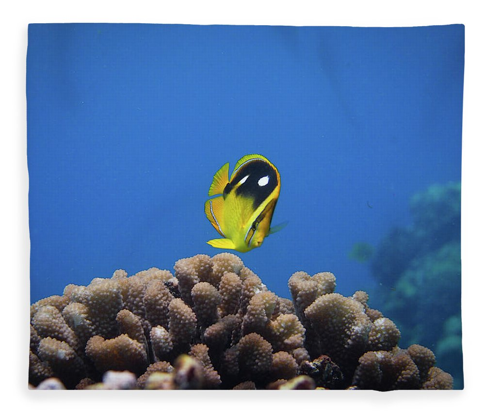 Underwater Fleece Blanket featuring the photograph Four Spot Butterfly by Taiki Sakai