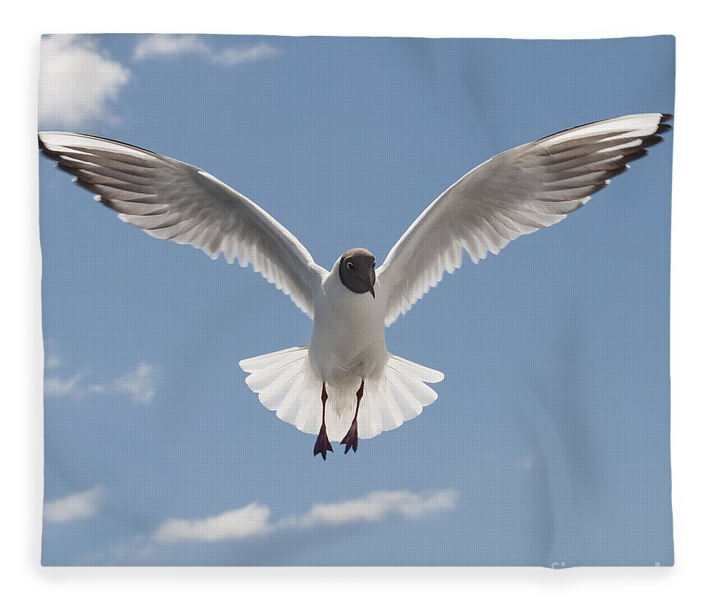 Festblues Fleece Blanket featuring the photograph Freedom.. by Nina Stavlund