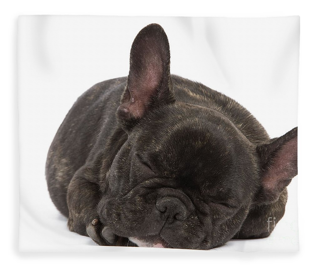 Dog Fleece Blanket featuring the photograph French Bulldog by Jean-Michel Labat