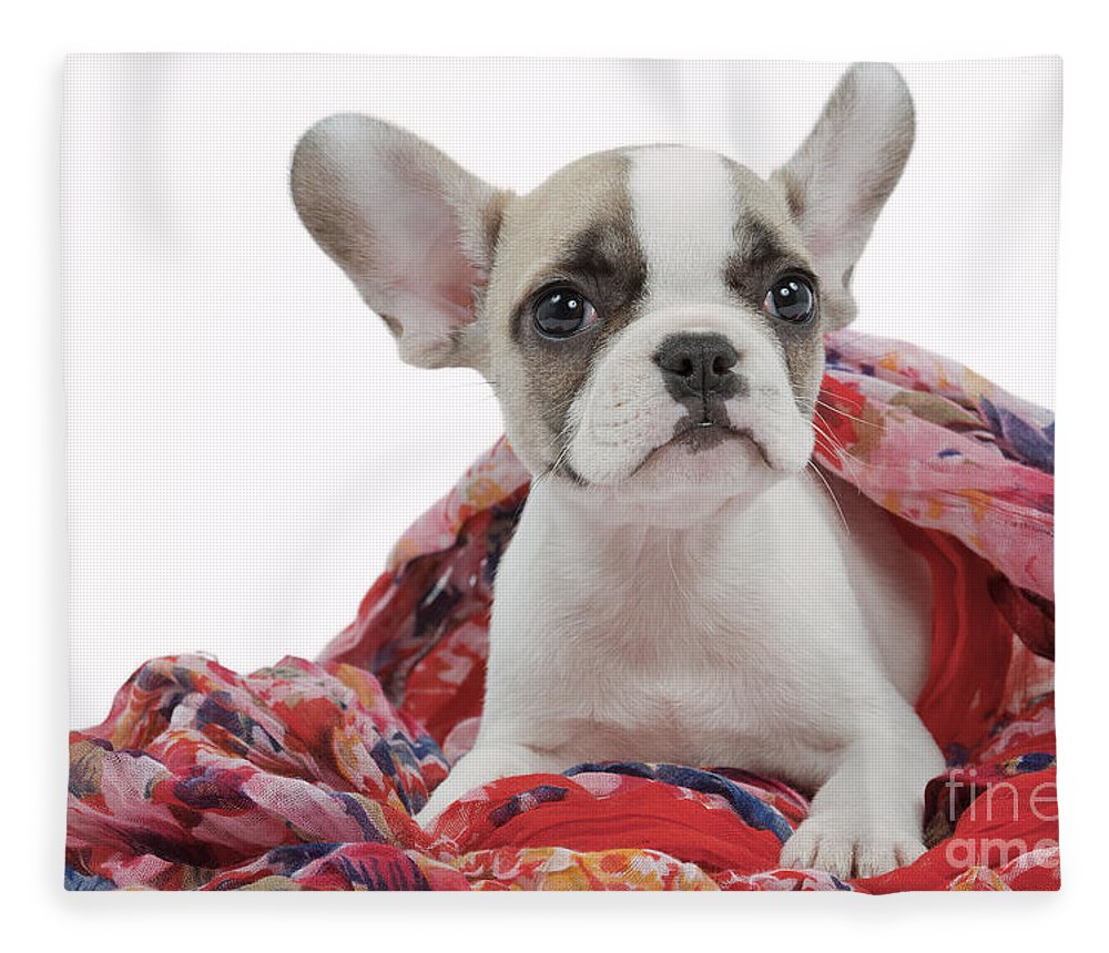 Dog Fleece Blanket featuring the photograph French Bulldog Puppy by Jean-Michel Labat