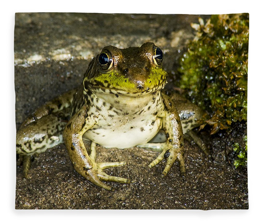 Frog Fleece Blanket featuring the photograph Frog Pose by Richard Kitchen