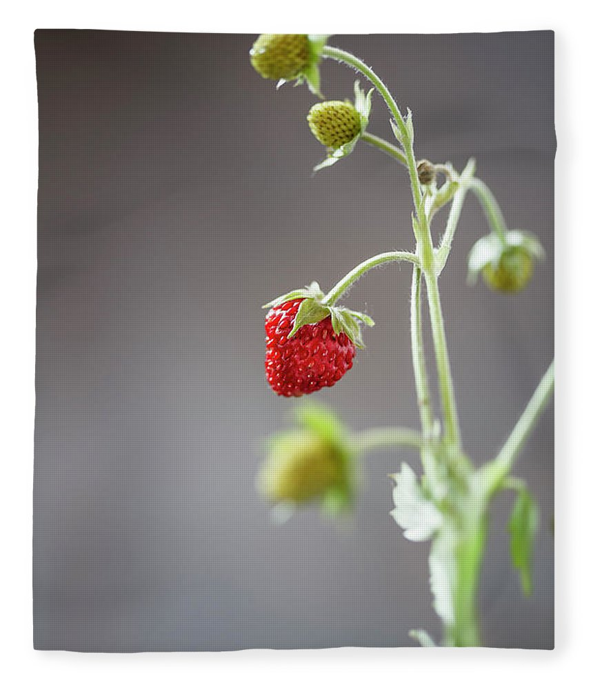 Wild Strawberry Fleece Blanket featuring the photograph Germany, Baden Wuerttemberg, Wild by Westend61