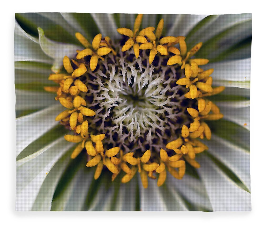 Outdoors Fleece Blanket featuring the photograph Germany, Zinnia Flower, Close Up by Westend61
