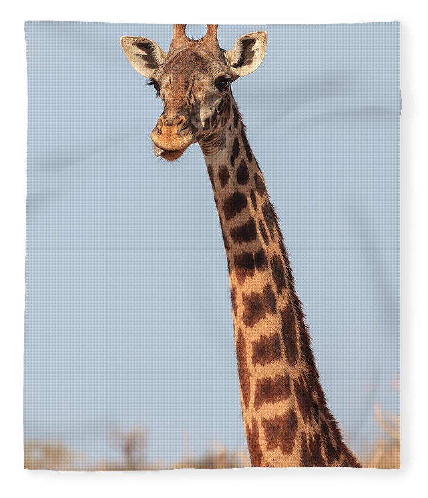 3scape Photos Fleece Blanket featuring the photograph Giraffe Tongue by Adam Romanowicz