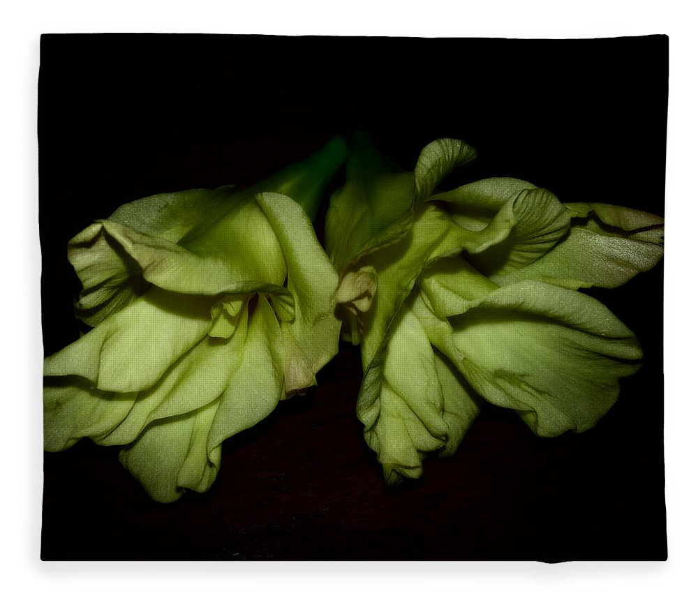 Gladiolus Fleece Blanket featuring the photograph Gladiolus In Shadows by Paulina Roybal