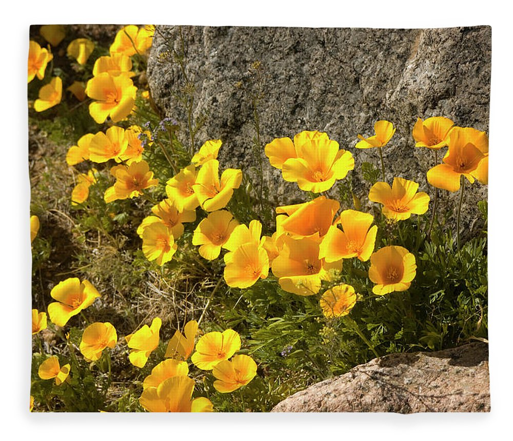 Chihuahua Desert Fleece Blanket featuring the photograph Golden Poppies Among Rocks by Elflacodelnorte