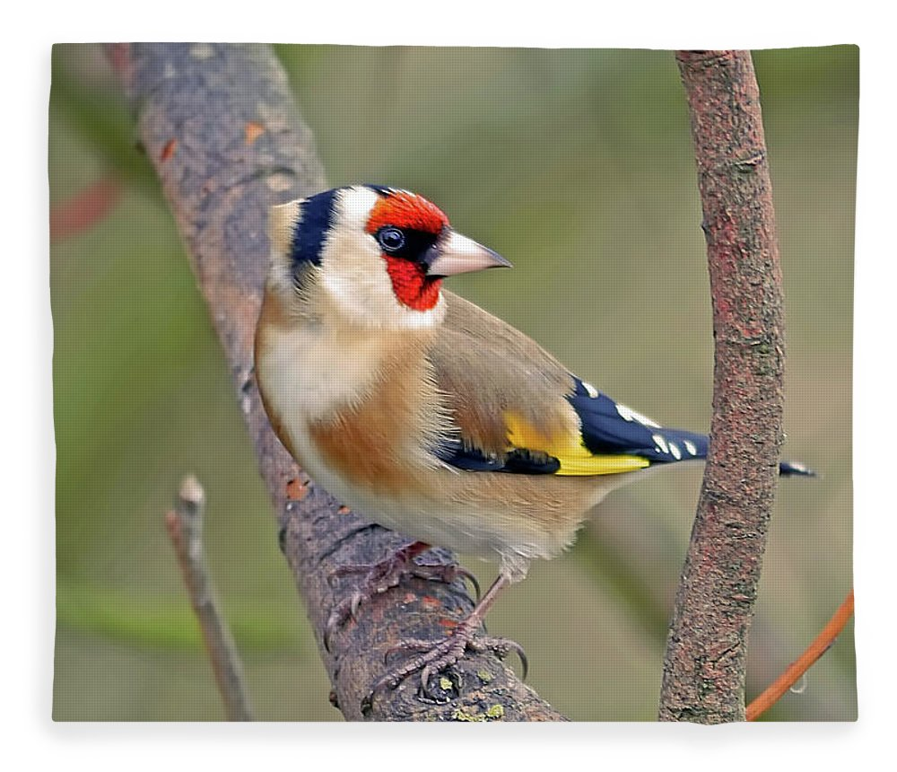 Animal Themes Fleece Blanket featuring the photograph Goldfinch by Kevspix