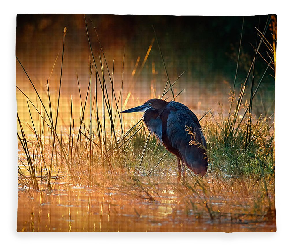 Heron Fleece Blanket featuring the photograph Goliath Heron With Sunrise Over Misty River by Johan Swanepoel