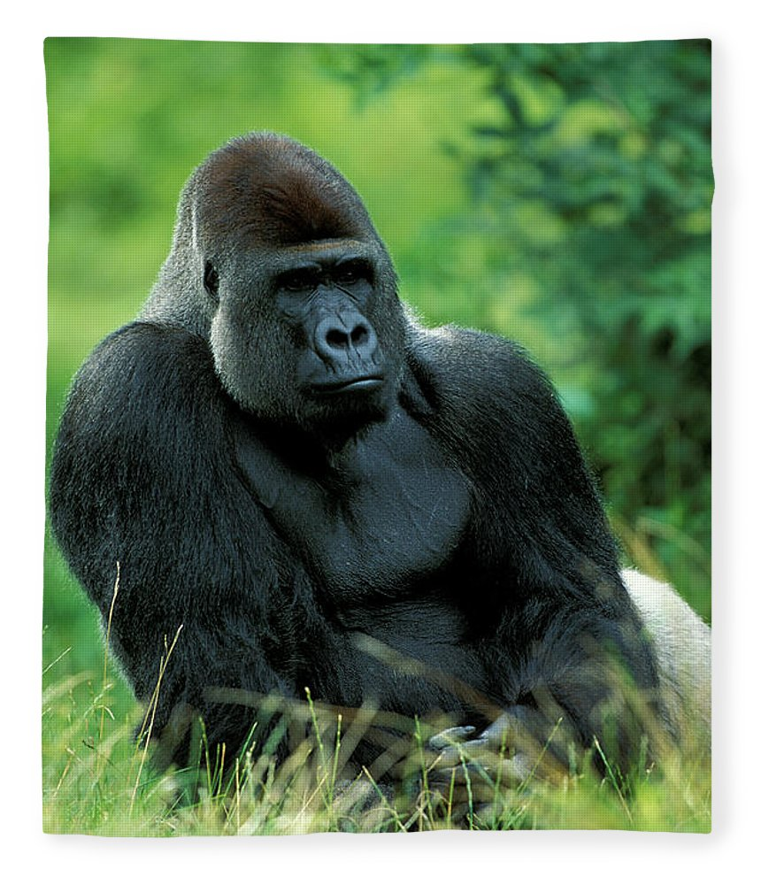 Photography Fleece Blanket featuring the photograph Gorilla by Animal Images