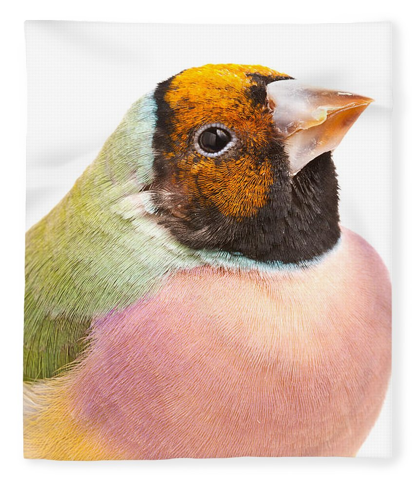 Animal Fleece Blanket featuring the photograph Gouldian Finch Erythrura Gouldiae by David Kenny