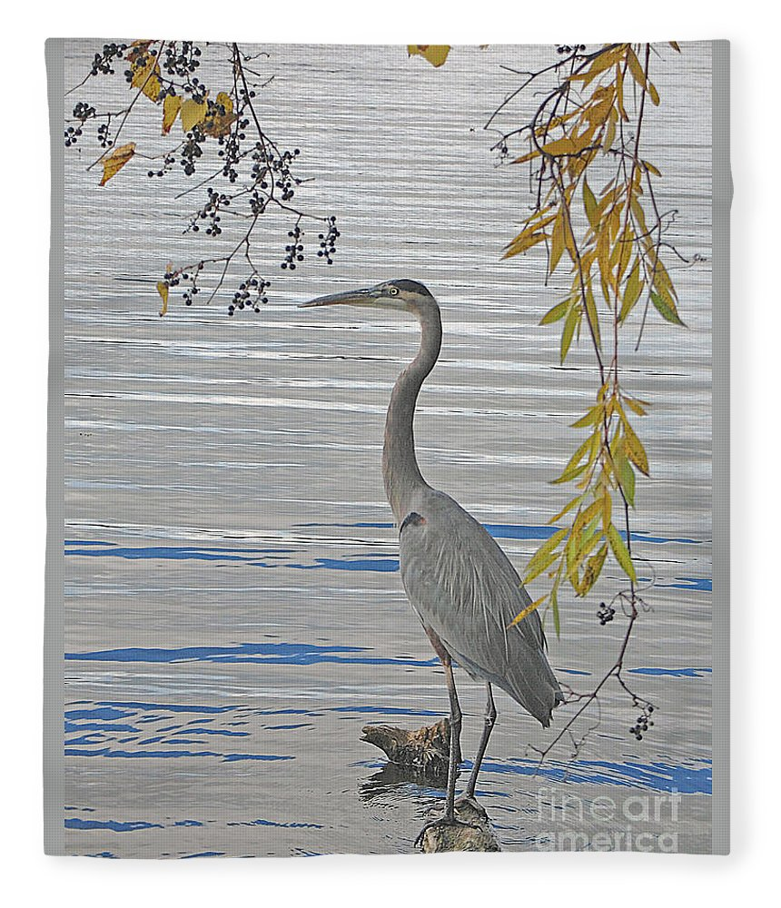 Heron Fleece Blanket featuring the photograph Great Blue Heron by Ann Horn