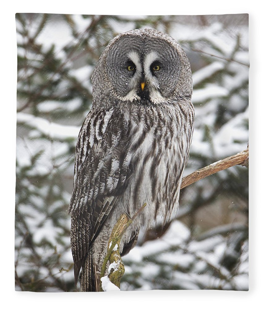 Feb0514 Fleece Blanket featuring the photograph Great Gray Owl In A Tree Germany by Duncan Usher