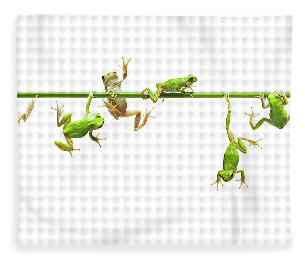 Hanging Fleece Blanket featuring the photograph Green Flogs Each Other Freely On Stem by Yuji Sakai