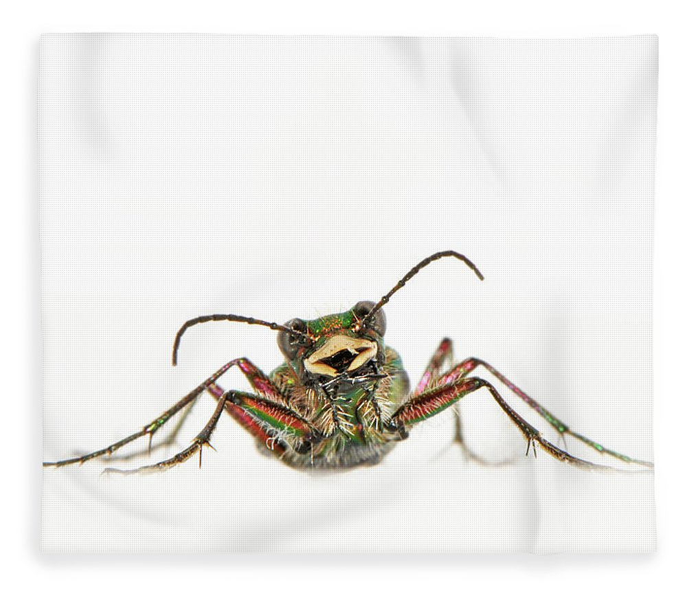 White Background Fleece Blanket featuring the photograph Green Tiger Beetle by Robert Trevis-smith