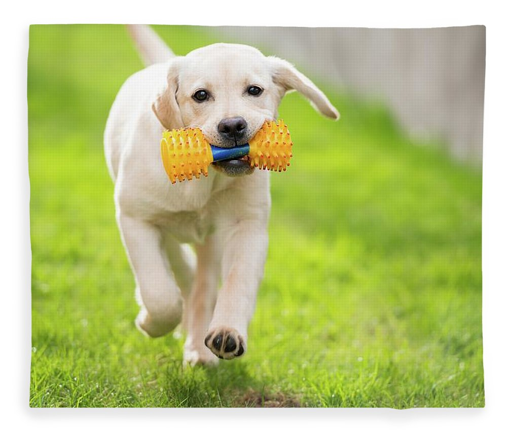 Pets Fleece Blanket featuring the photograph Happy Hour by Stefan Cioata