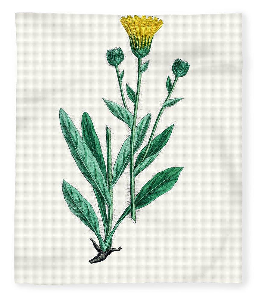 Art Fleece Blanket featuring the digital art Hawkweed Chicory Plant 19th Century by Mashuk