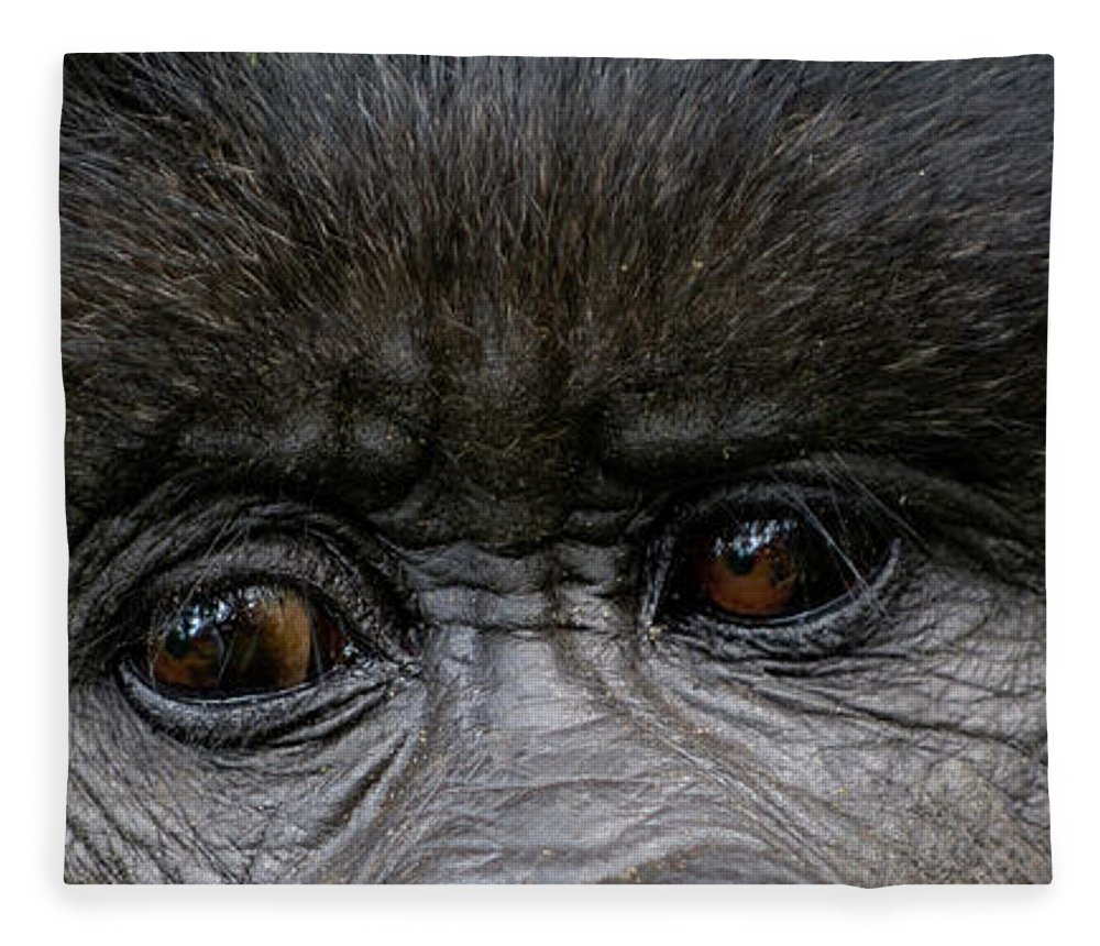 Photography Fleece Blanket featuring the photograph Headshot Of Mountain Gorilla Gorilla by Panoramic Images
