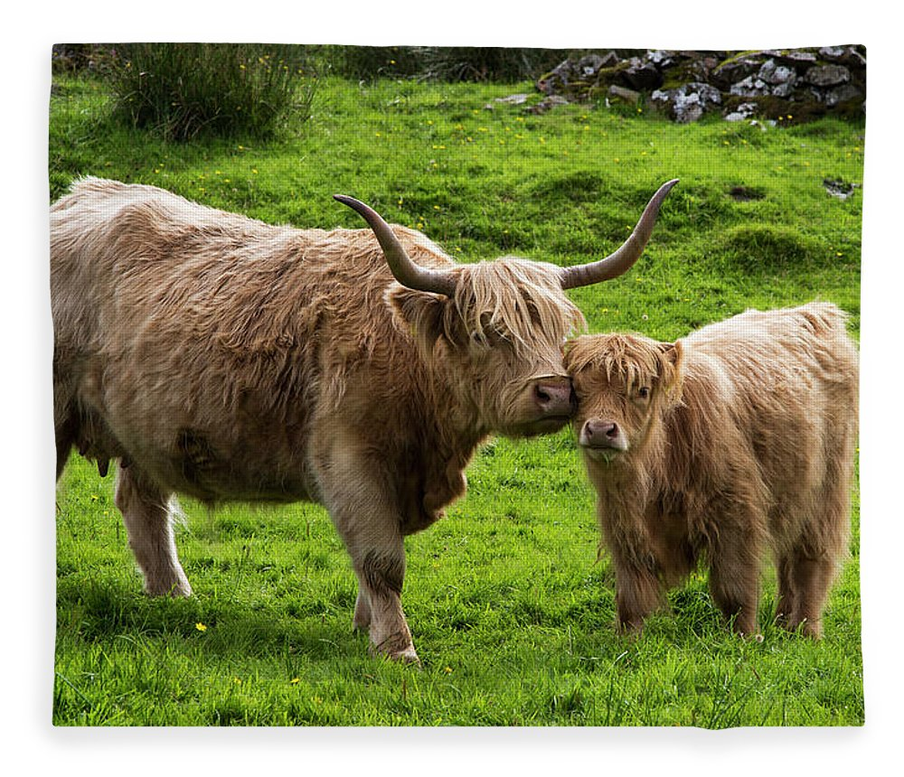 Horned Fleece Blanket featuring the photograph Highland Cattle And Calf by John Short / Design Pics