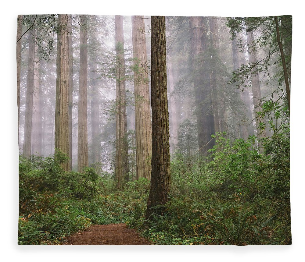 Tranquility Fleece Blanket featuring the photograph Hiking Through Californias Redwoods by David Hoefler