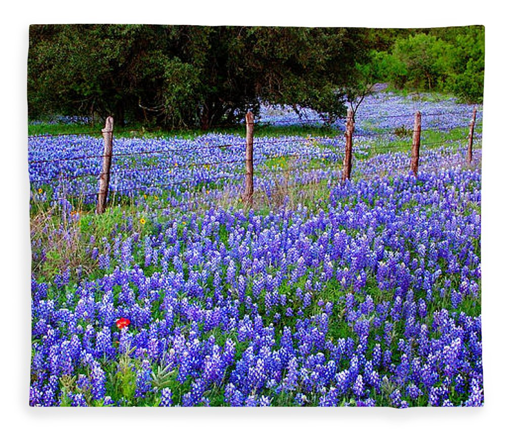 Hill Country Heaven Texas Bluebonnets Wildflowers Landscape Fence