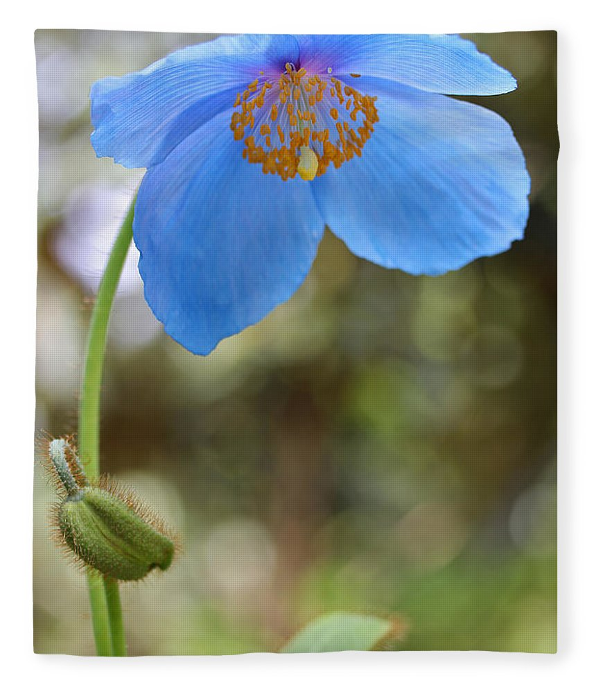 Himalayan Blue Poppy Flower Fleece Blanket For Sale By Jennie Marie