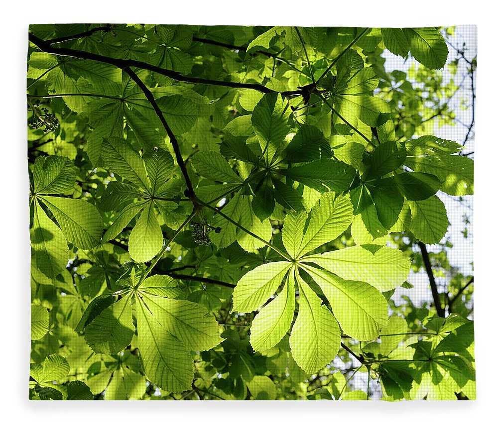 Backgrounds Fleece Blanket featuring the photograph Horse Chestnut Leaves by Jeffoto