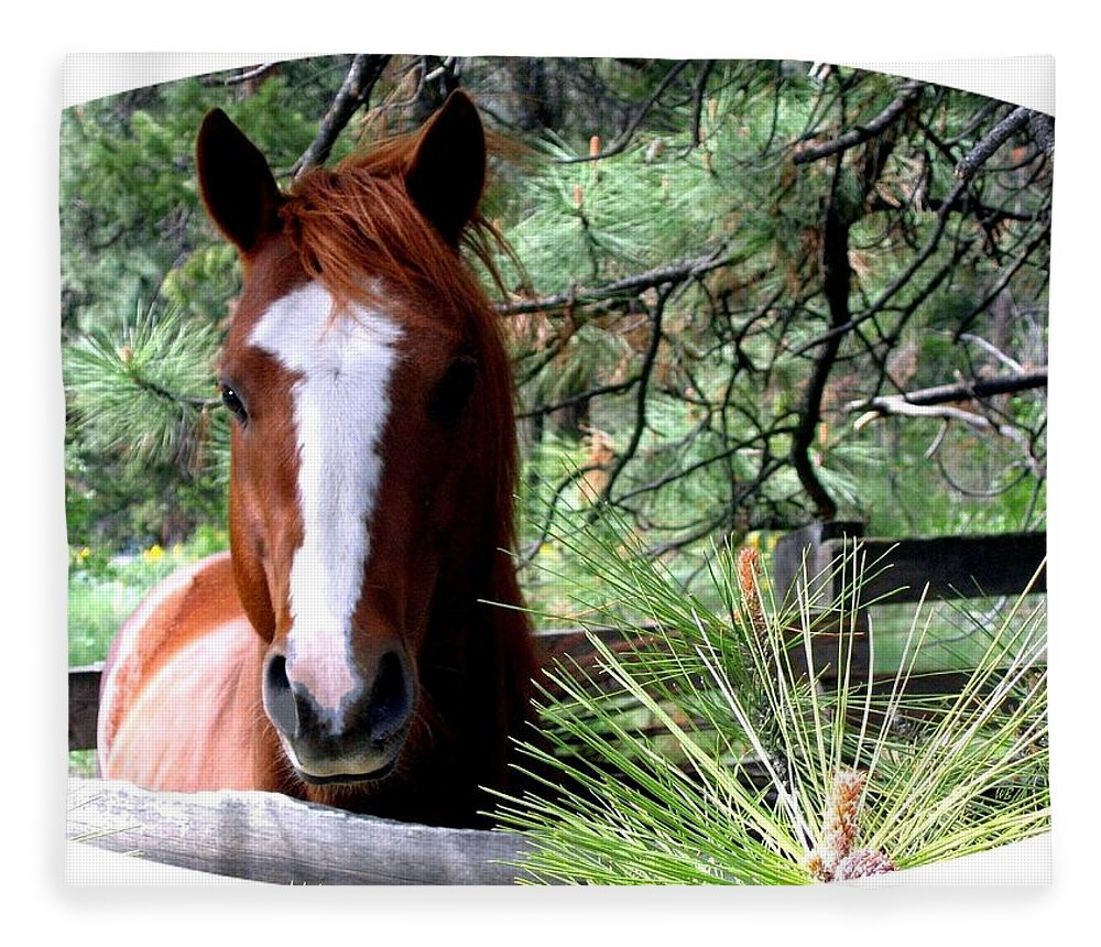 Horse Fleece Blanket featuring the photograph Horse Country by Will Borden