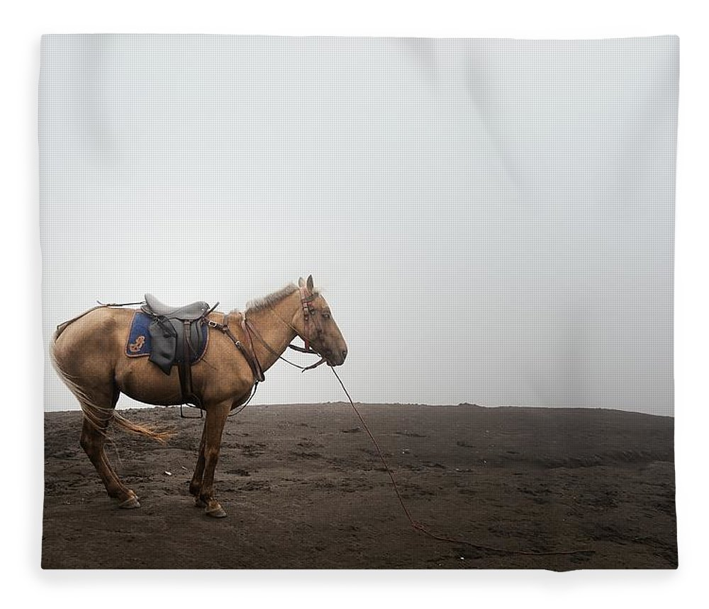Horse Fleece Blanket featuring the photograph Horse On A Mountain On A Foggy Day by Carlina Teteris