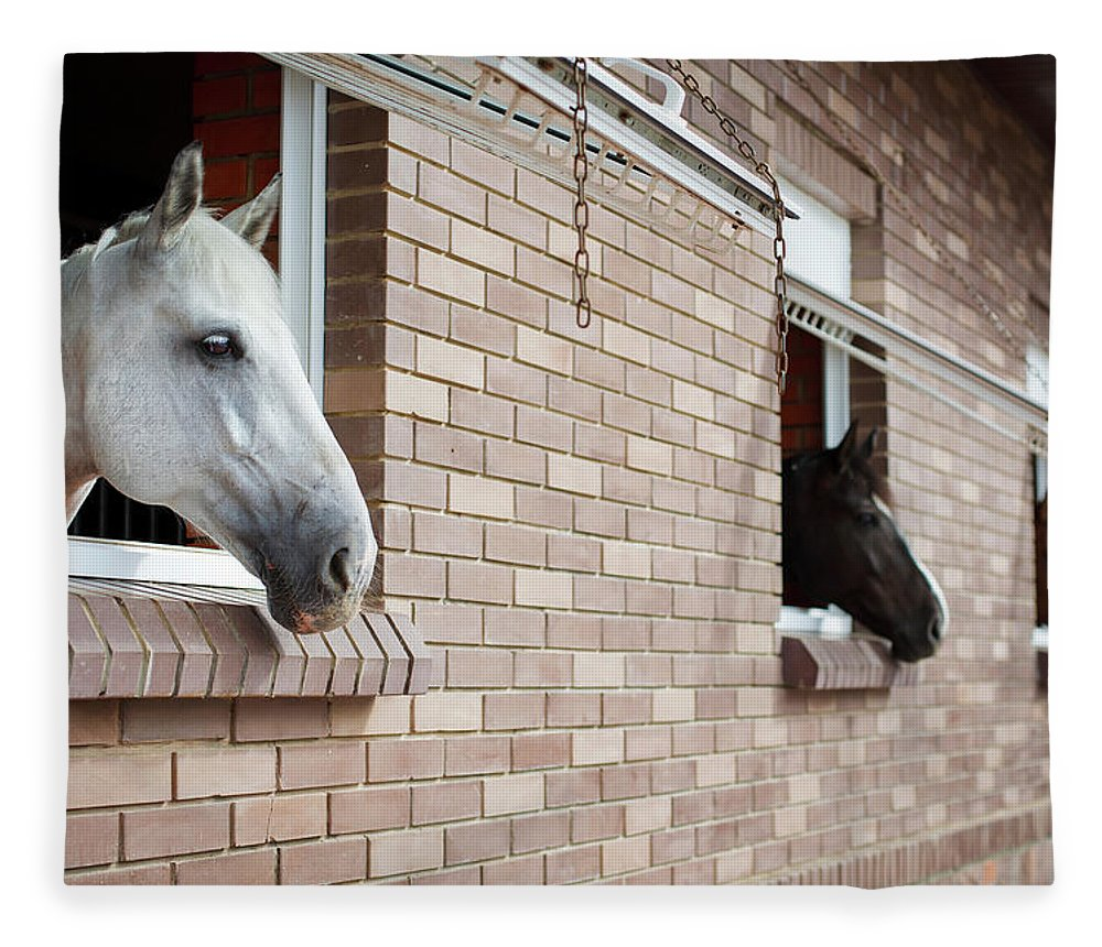 Horse Fleece Blanket featuring the photograph Horses Looking From The Windows Of A by O sa