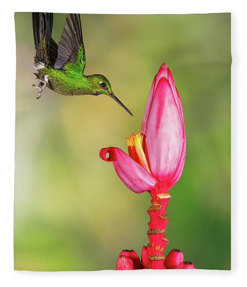 Green-crowned Brilliant Fleece Blanket featuring the photograph Hummingbird , Green-crowned Brilliant by Kencanning