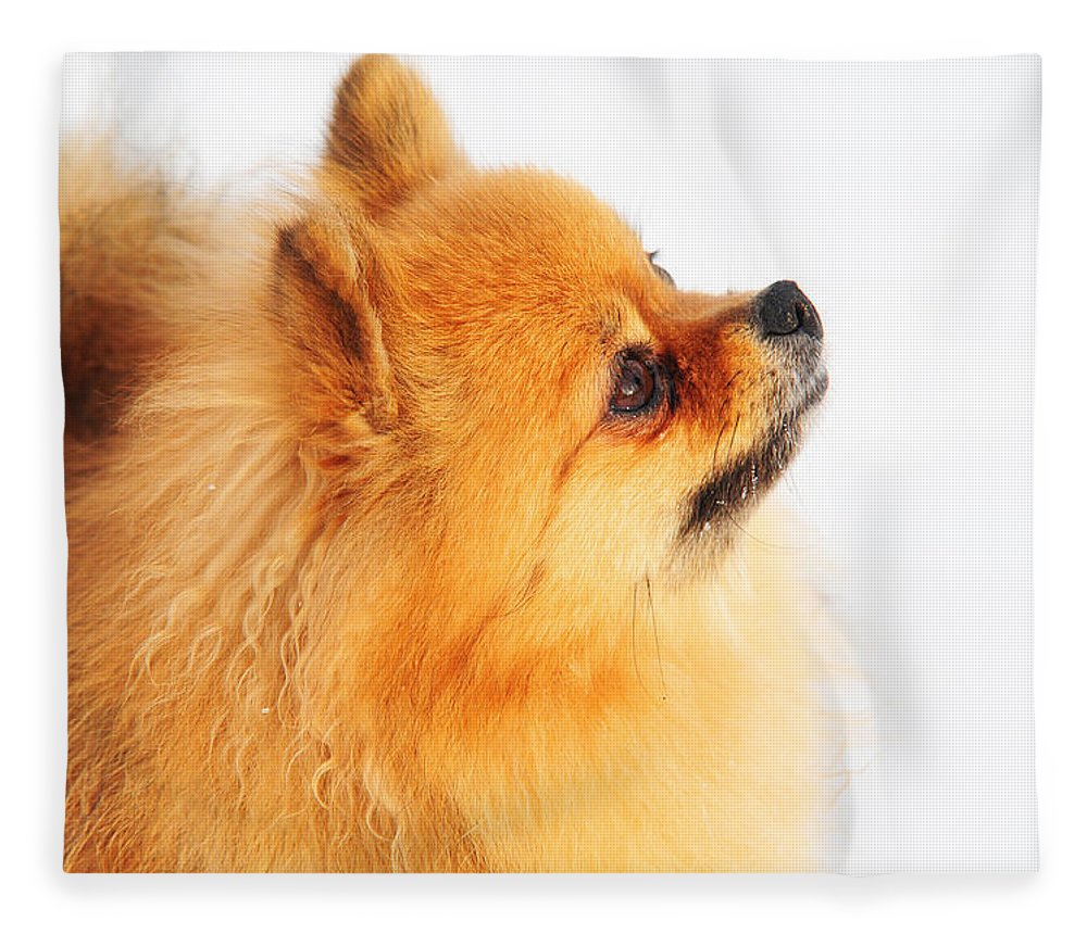Dog Fleece Blanket featuring the photograph I Am Here by Jenny Rainbow