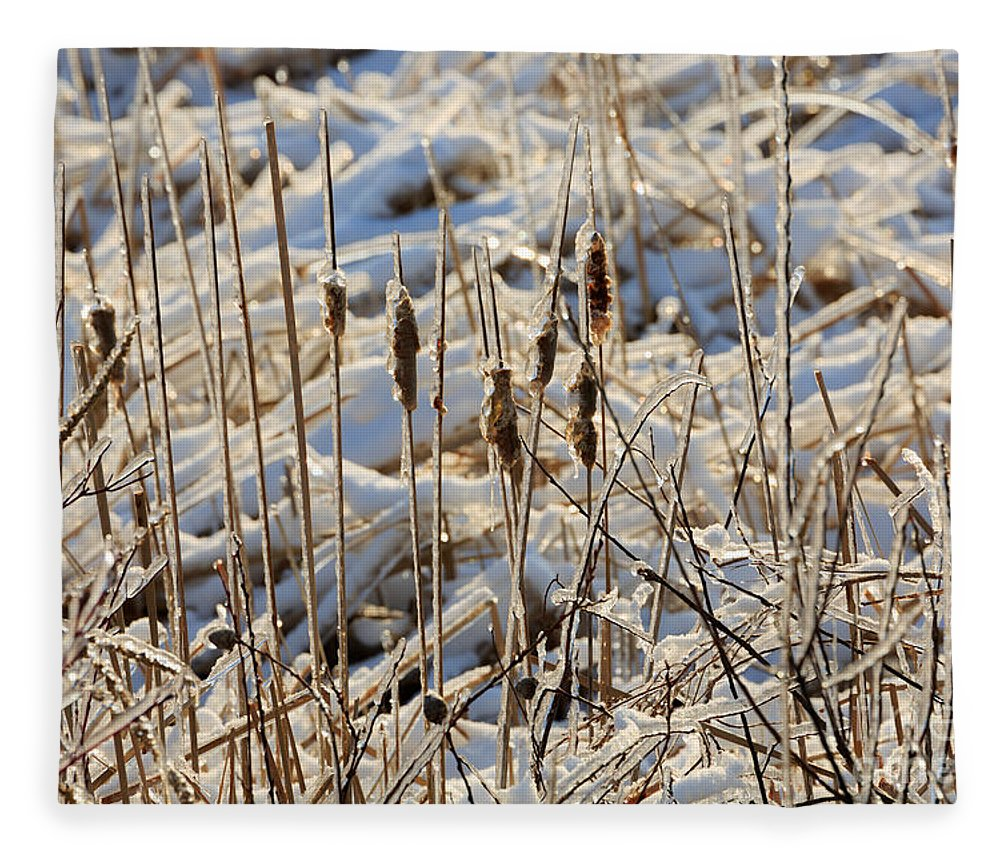 Ice Fleece Blanket featuring the photograph Ice Coated Bullrushes by Louise Heusinkveld