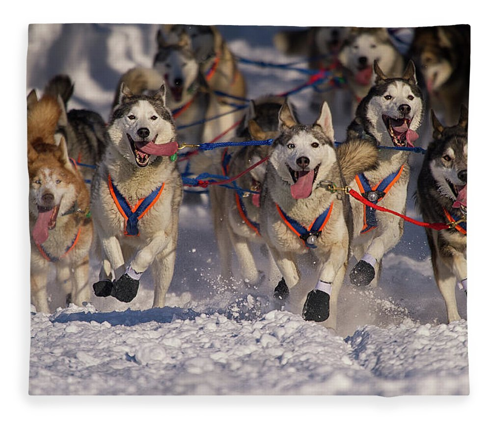 Snow Fleece Blanket featuring the photograph Iditarod Huskies by Alaska Photography
