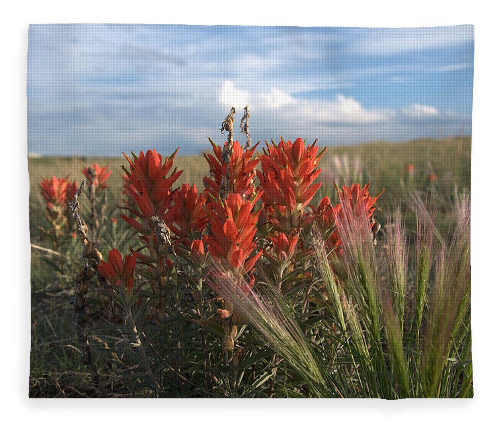 Flower Fleece Blanket featuring the photograph Indian Paintbrush by Frank Madia