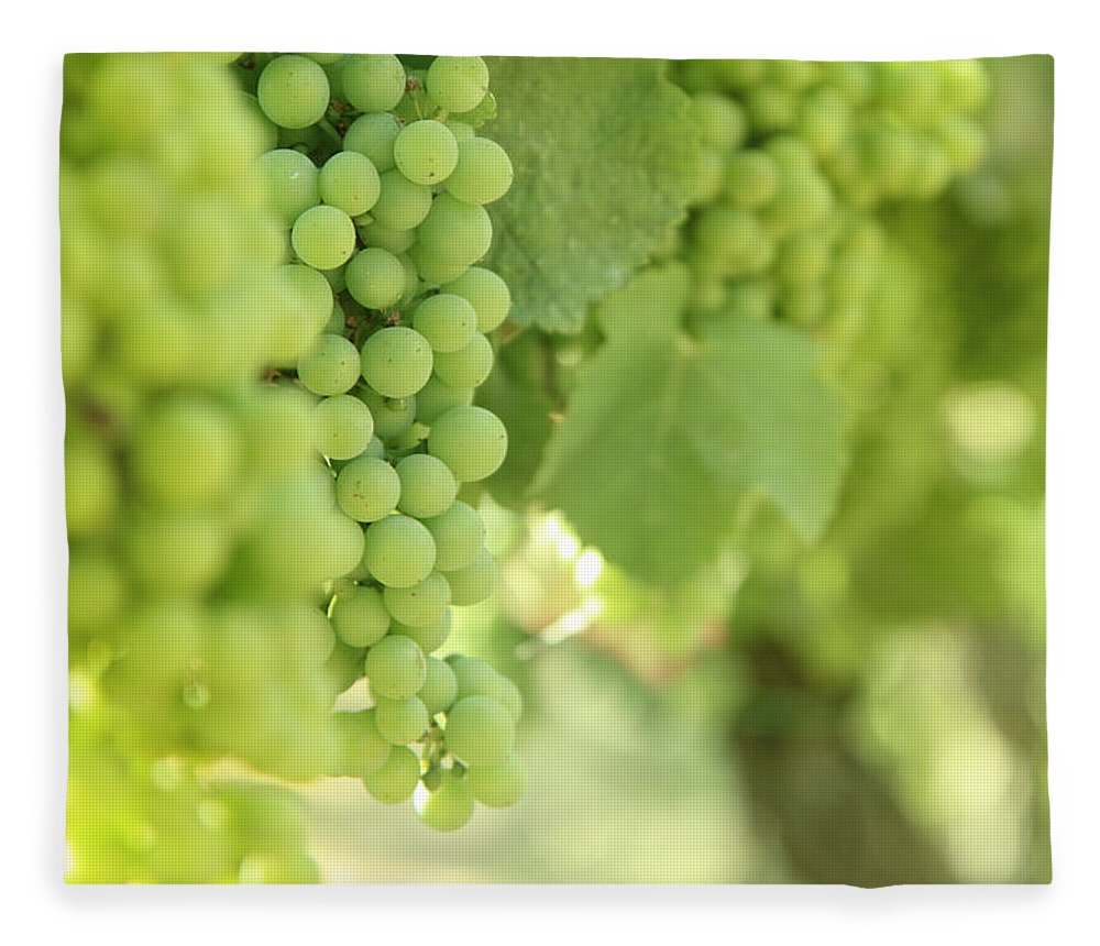 Alcohol Fleece Blanket featuring the photograph Italian Spumante White Grapes by Tostphoto