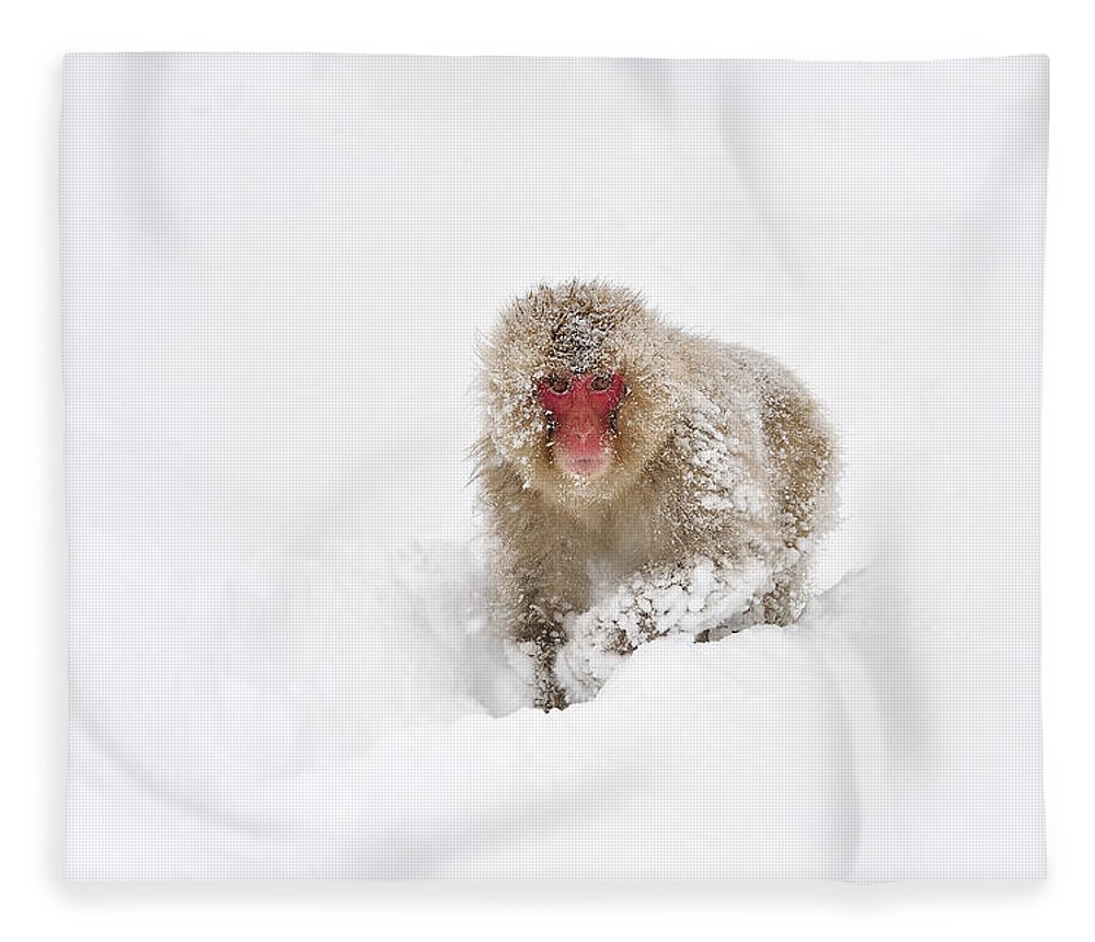 Thomas Marent Fleece Blanket featuring the photograph Japanese Macaque In Snow Jigokudani by Thomas Marent