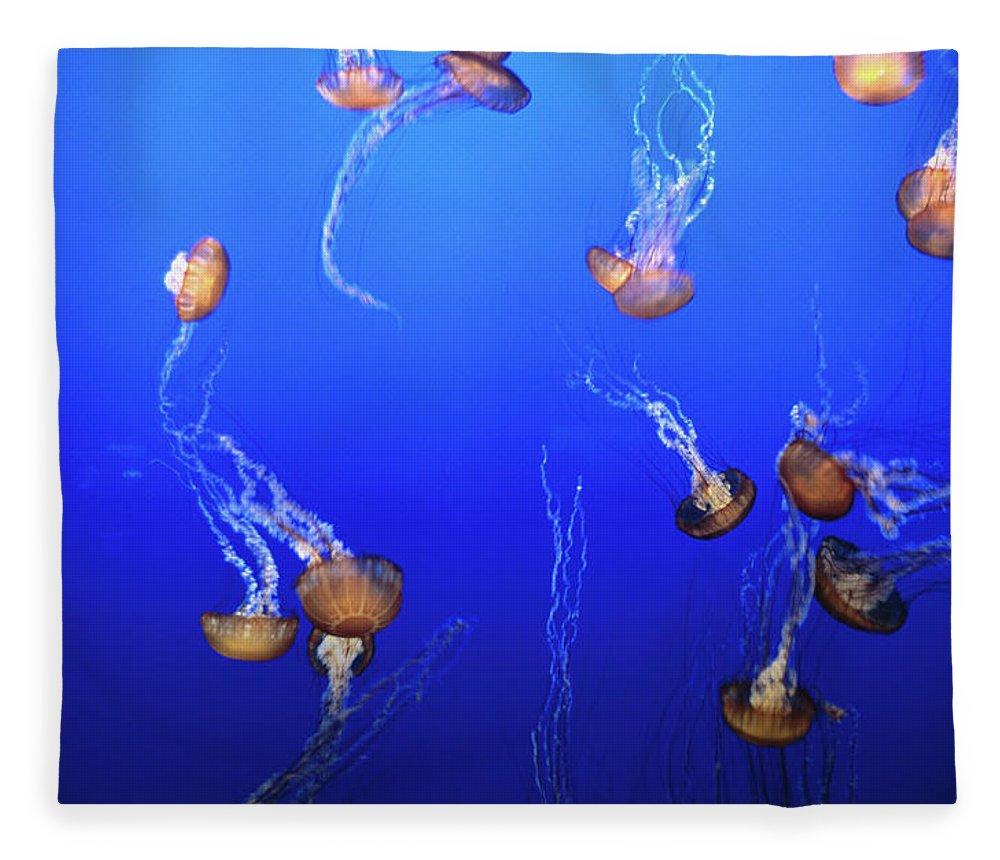 Monterey Bay Aquarium Fleece Blanket featuring the photograph Jellyfish In Monterey Bay Aquarium by Holger Leue