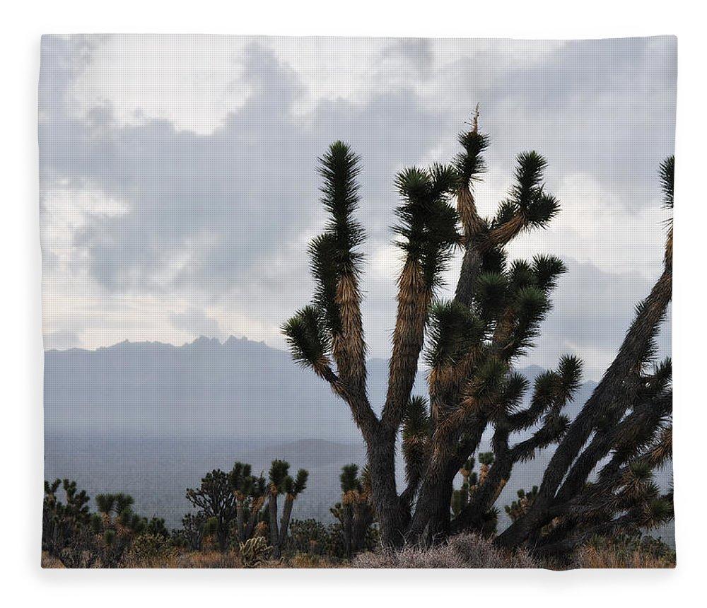Joshua Tree Fleece Blanket featuring the photograph Joshua Tree Forest Ivanpah Valley by Kyle Hanson