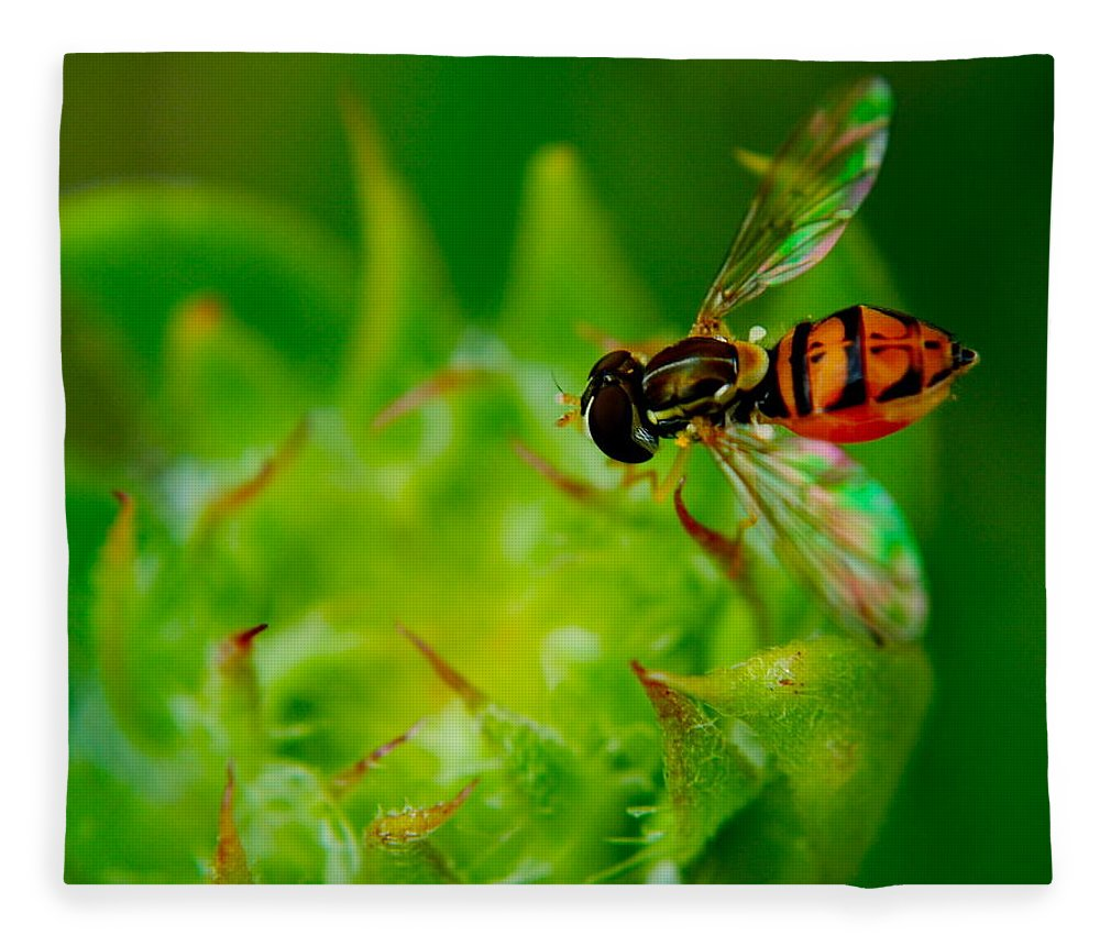 Bee Fleece Blanket featuring the photograph Just Beecause by Frozen in Time Fine Art Photography