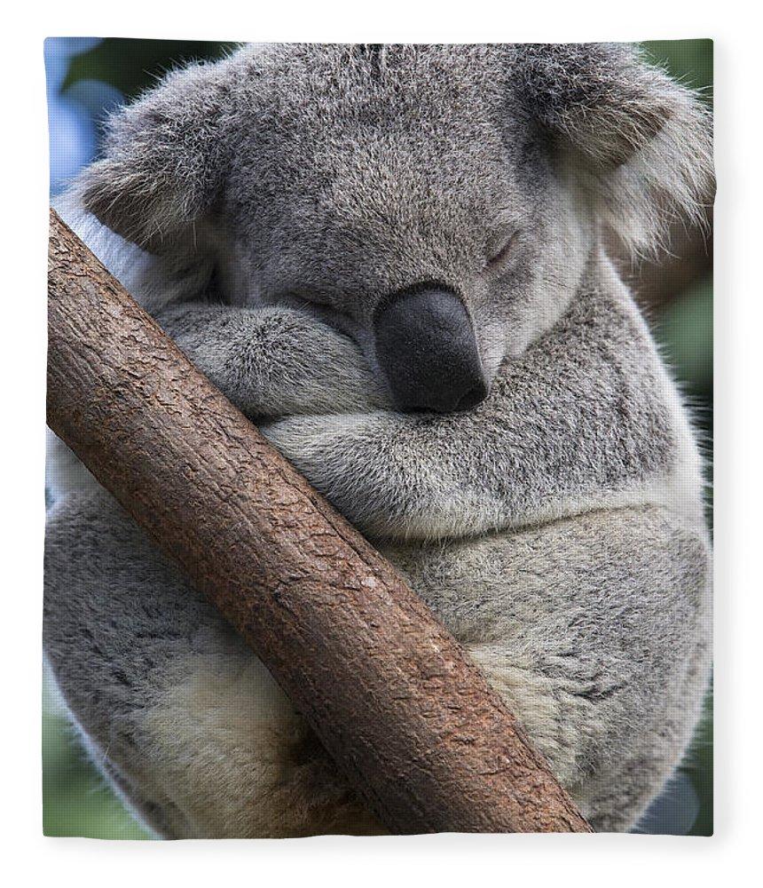 Feb0514 Fleece Blanket featuring the photograph Koala Male Sleeping Australia by Suzi Eszterhas