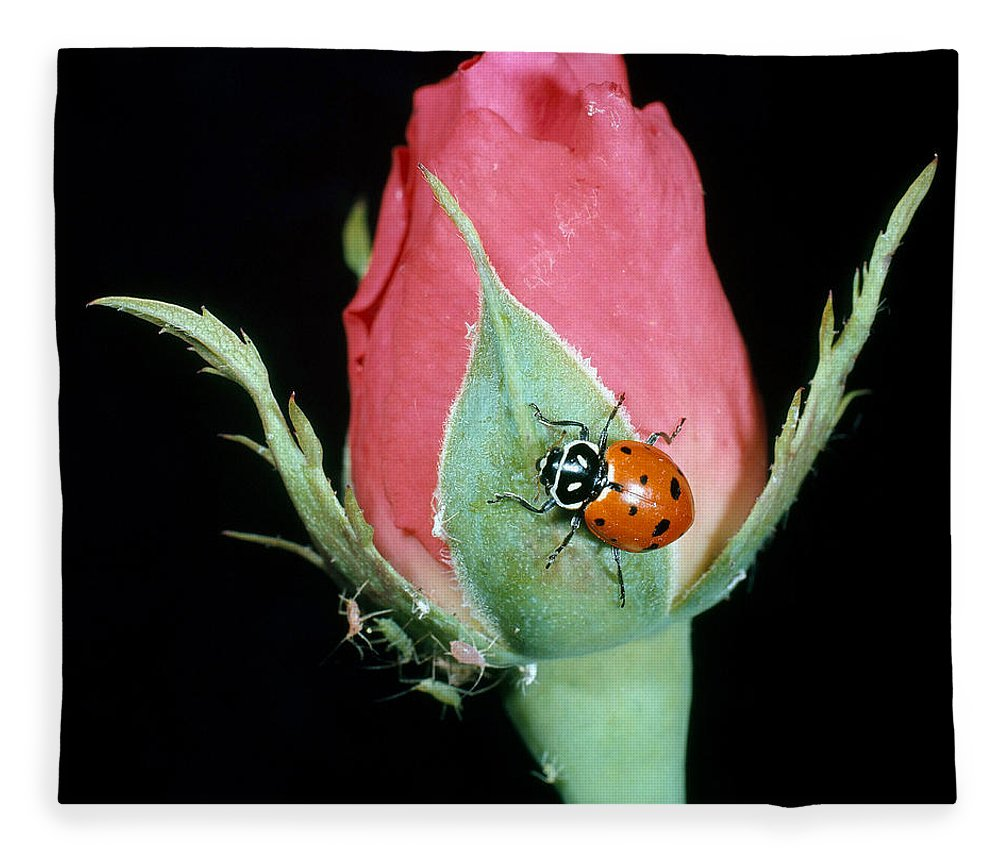 Ladybug Fleece Blanket featuring the photograph Ladybug Eating Aphids by Nicholas Smythe