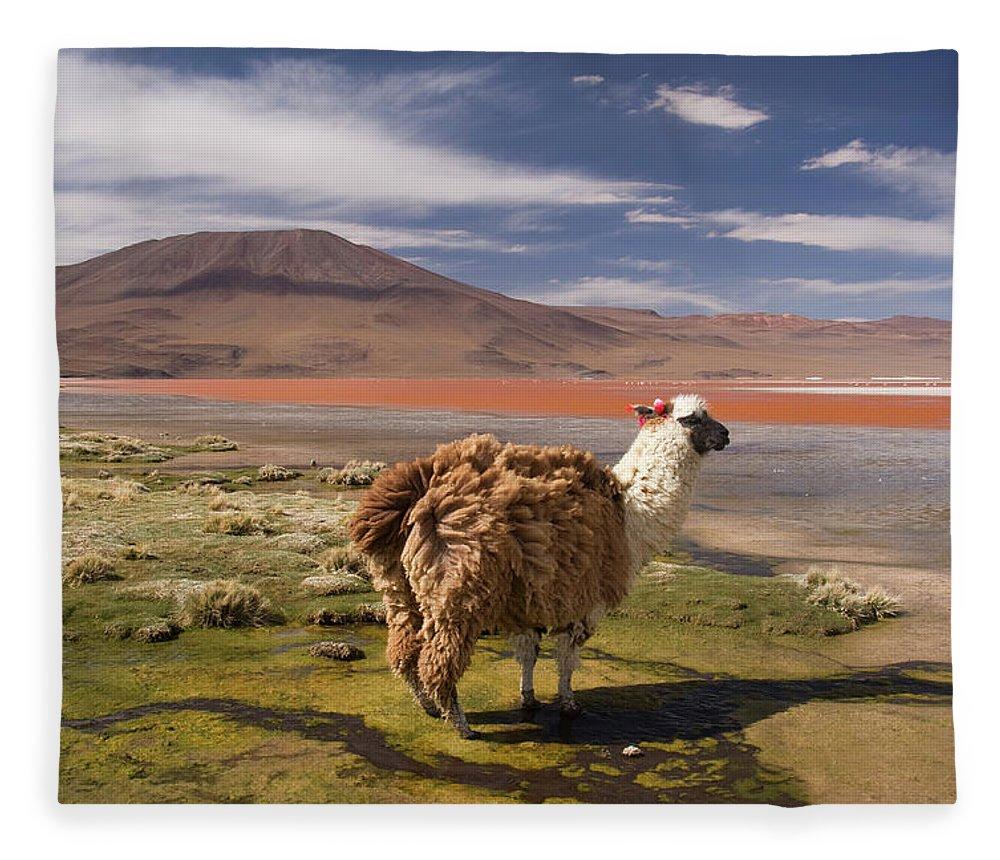 Scenics Fleece Blanket featuring the photograph Laguna Colorado Lake With Llama by John Elk