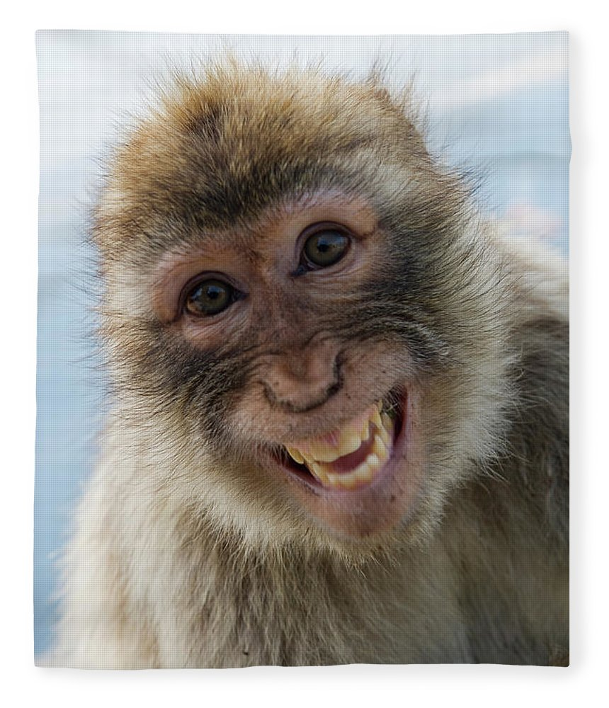 Alertness Fleece Blanket featuring the photograph Laughing Gibraltar Ape Barbary Macaque by Holger Leue