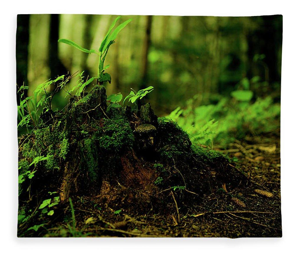Hokkaido Fleece Blanket featuring the photograph Leaf Bud by Plasticboystudio