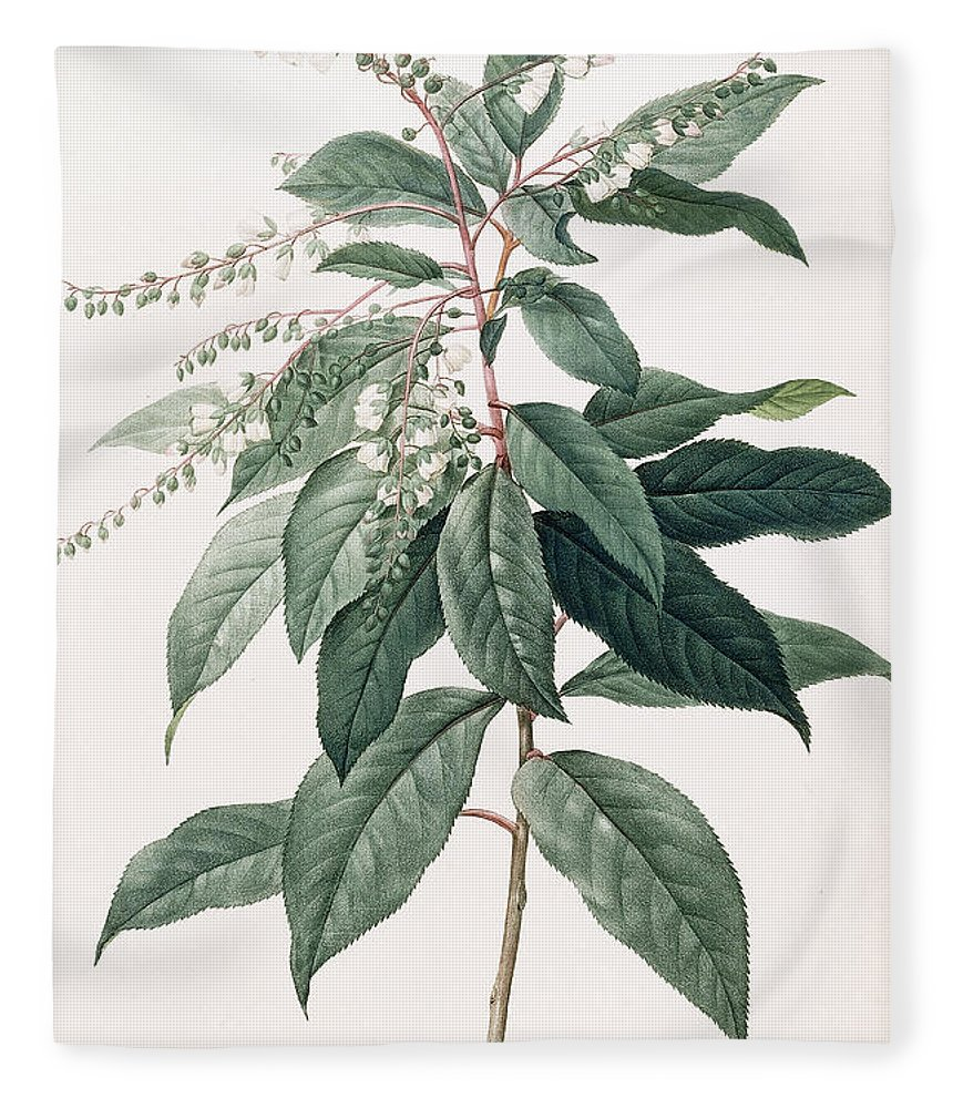 Lily Of The Valley Tree Fleece Blanket For Sale By Pierre Joseph Redoute