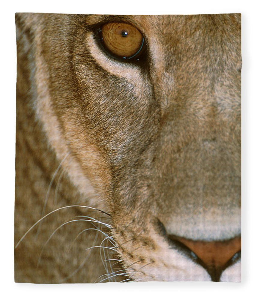 Photography Fleece Blanket featuring the photograph Lioness Close-up Tanzania Africa by Panoramic Images