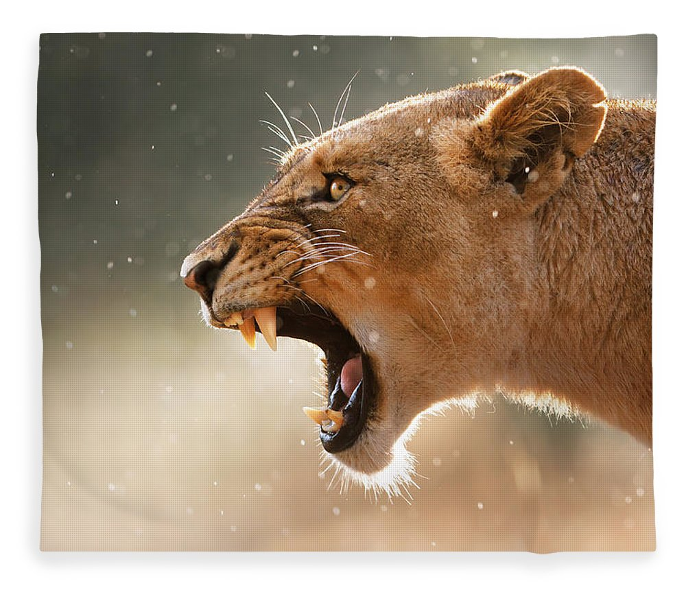 Lion Fleece Blanket featuring the photograph Lioness displaying dangerous teeth in a rainstorm by Johan Swanepoel