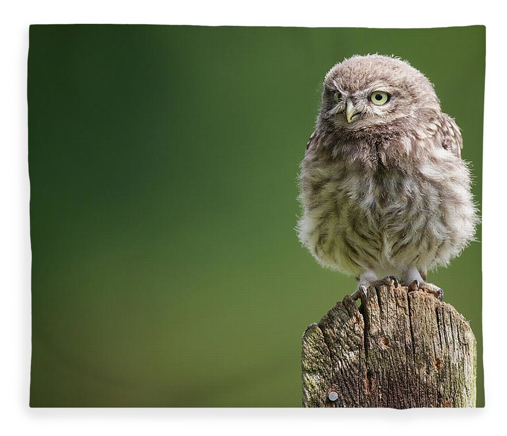 Owlet Fleece Blanket featuring the photograph Little Fuzzy by Markbridger