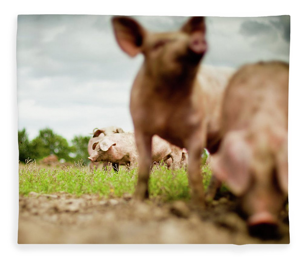 Pig Fleece Blanket featuring the photograph Little Pigs by Emmanuelle Brisson